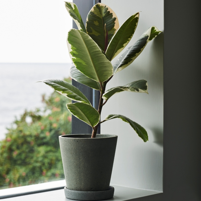 Vasos plantas Hay Flowerpot with saucer